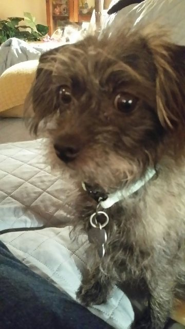 I Am Looking For A Rescue Home For Small Dogs