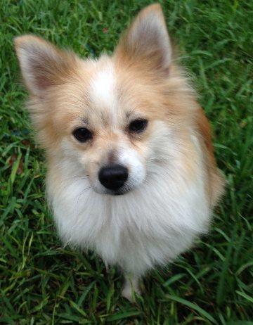 Small Dog Rescue Orlando