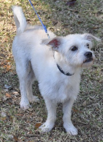 Small Dog Rescue Central Florida