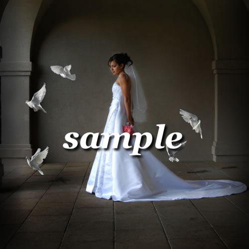 Bride & Doves - Indoor