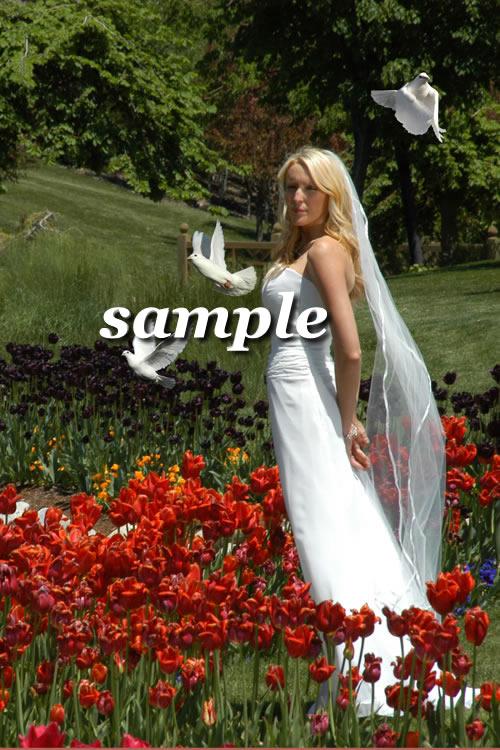 Bride & Doves - Outdoor Tulips