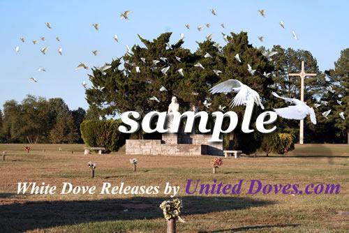 White Dove Release 01