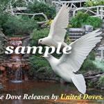 White Dove Release 02