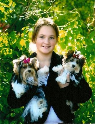 Biewer Puppies for Sale   Biewer Yorkshire Terriers   Biewer