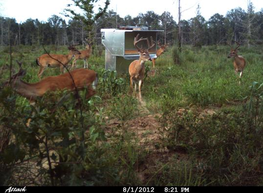 "six rack bucks at the gargantian Double ""D"" gravity deer feeder"