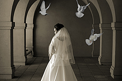 White Dove Releases for Weddings