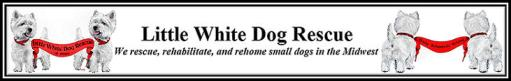 Little White Dog Rescue
