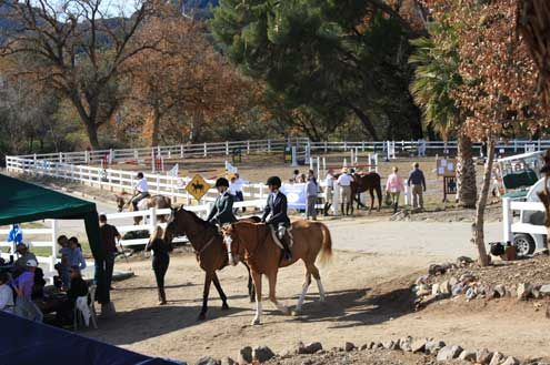 Main hunter ring at Pegasus Equestrian Center (Photo by Paula Parisi)