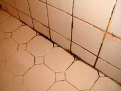 Mould on Bathroom Tiles