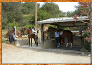 Welcome Ramor Oaks Riding Club
