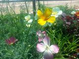 Medicinal Herb Garden Design