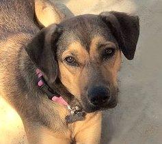 Ester (our dog)