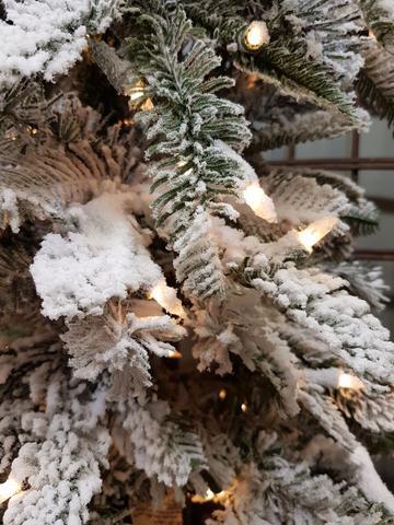 Snowcrest Spruce