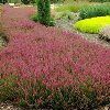 Allegro Scotch Heather