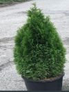 Emerald Pointe Cedar