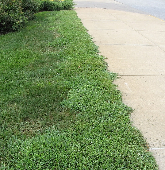 Bad Crabgrass