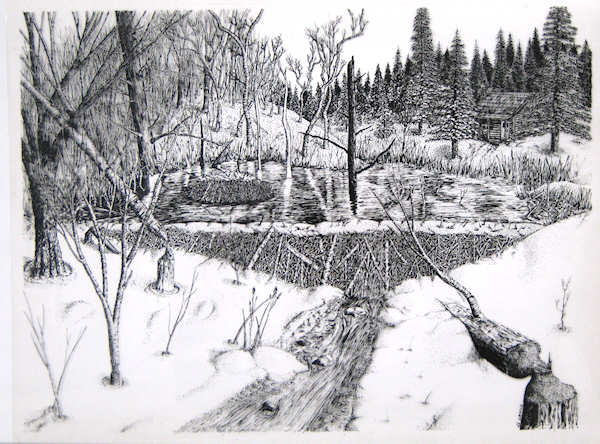 """Beaver Pond"" pen & ink by John Entrekin"