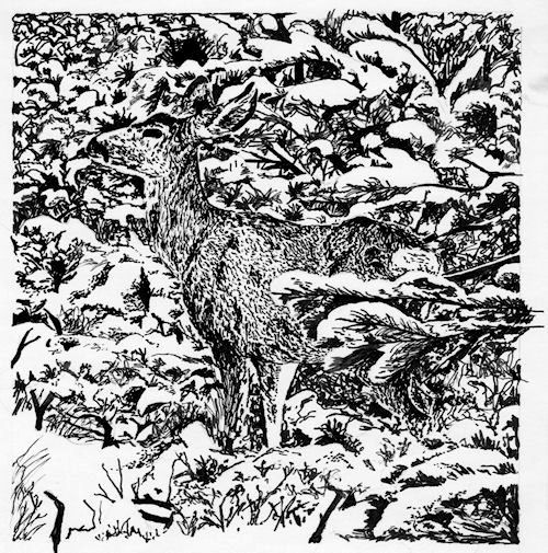 """Deer Hiding in Snow"" pen & ink by John Entrekin"