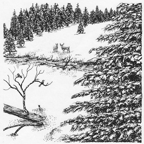 """Deer in Snow"" pen & ink by John Entrekin"