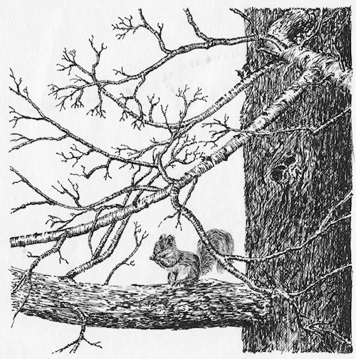 """Squirrel in Tree"" pen & ink by John Entrekin"