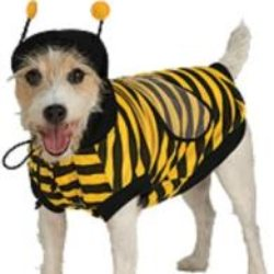 yellow and black hooded bumble bee dog costume