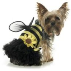black and yellow daisy bumble bee girl dog costume