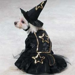 witch Halloween costume for dogs