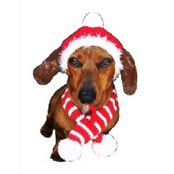 dallas dog Red Holiday Hat and Candy Cane Scarf