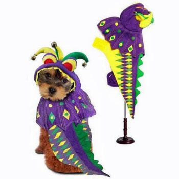colorful dog mardi gras costume