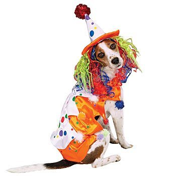 dog clown costume