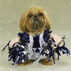 white and blue dog cheerleader costume with pom poms