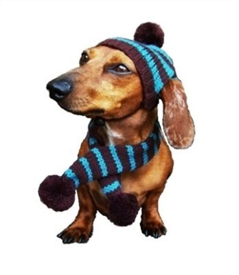 Turquoise/Brown Striped Dog Hat & Scarf