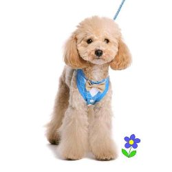 Dogo EasyGO Bowtie Harness Blue