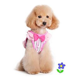 pink and white striped SweetBow ruffled dog Harness