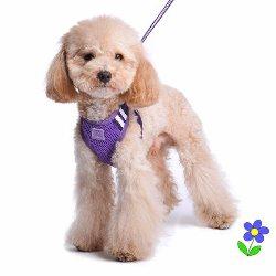Dogo EasyGO Basic dog Harness Purple