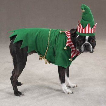 green elf dog costume with hat