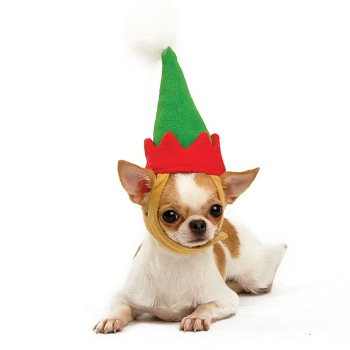 dog elf hat