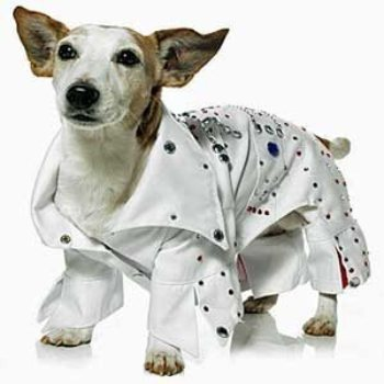 Elvis Presley in white jumpsuit pet costume