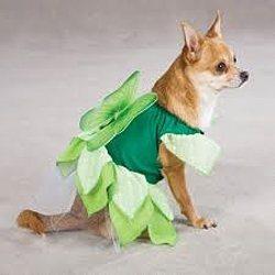 tinkerbell dog costume