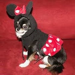 polka dot red dress and mouse ears with a bow Minnie Mouse Dog Costume