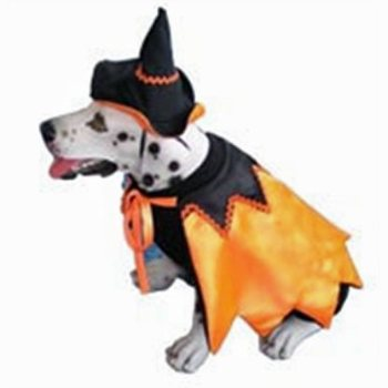 dog caped witch Halloween costume