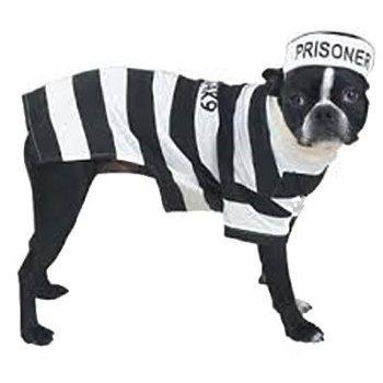 black and white striped prisoner dog costume