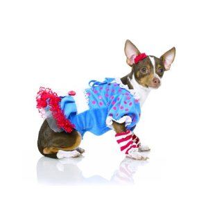 rag doll dog costume