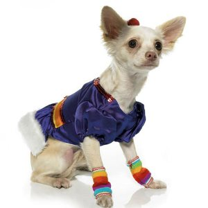 rainbow brite dog costume