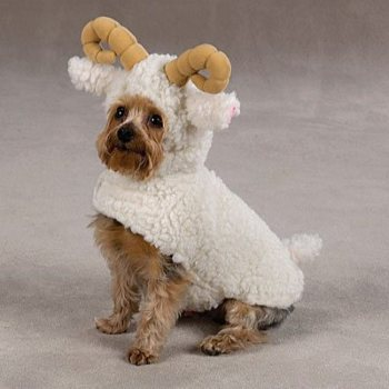 Soft and cuddly white berber  Lil' Sheep Halloween Costumes