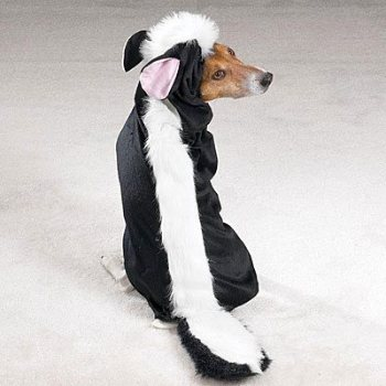 black and white with tail dog skunk costume