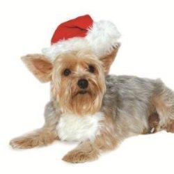 dogo Santa hat for dogs