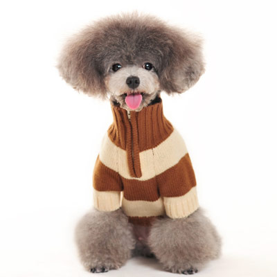 Male dog Sweater Clothing