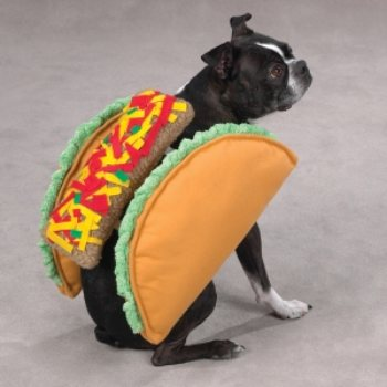 shaped like a Taco with lettuce and tomato accent dog Costumes