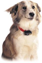 PetSafe, Innotek & SportDOG Bark Control Collars